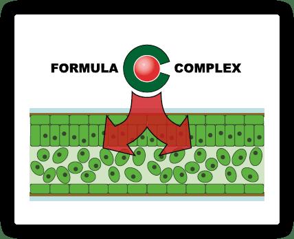 formula-schemat